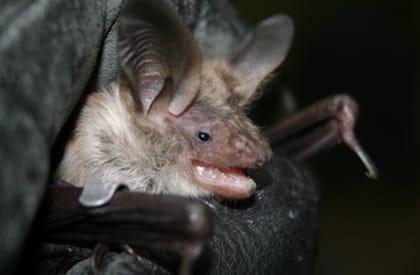 Ecological Surveys Overview - Bat