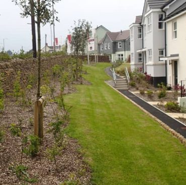 New Cornish hedge and native planting