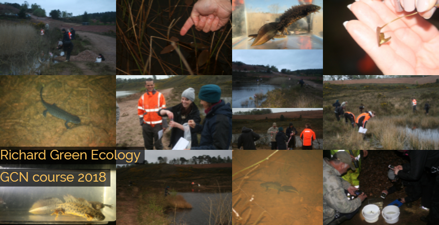 Great crested newt course is a great success!