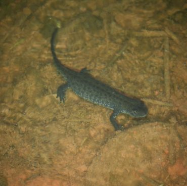Great crested newt projects