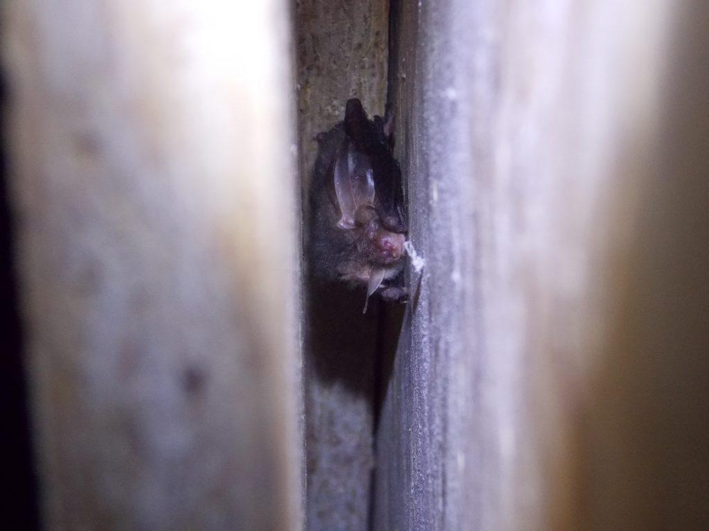 https://www.richardgreenecology.co.uk/successful-bat-mitigation/